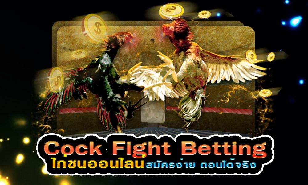 ไก่ชนออนไลน์ Cock Fight Betting สมัครง่าย ถอนได้จริง